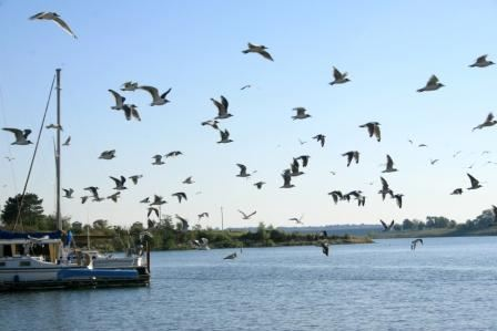 Birds flying near a boat